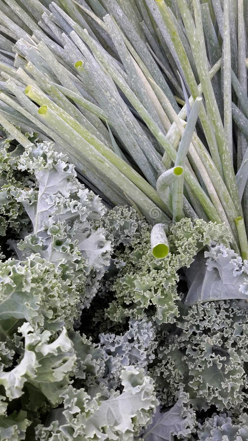 Salat fixins lizenzfreie stockfotografie