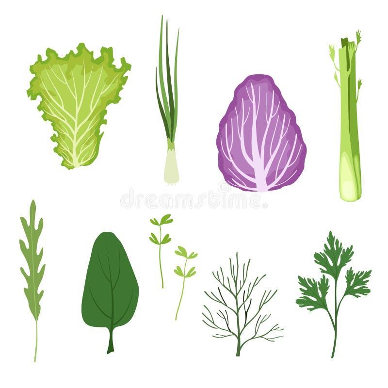 Salat grünt und die eingestellten Blätter, vegetarische gesunde organische Kräuter und Blattgemüse für das Kochen von Vektor Illu stock abbildung