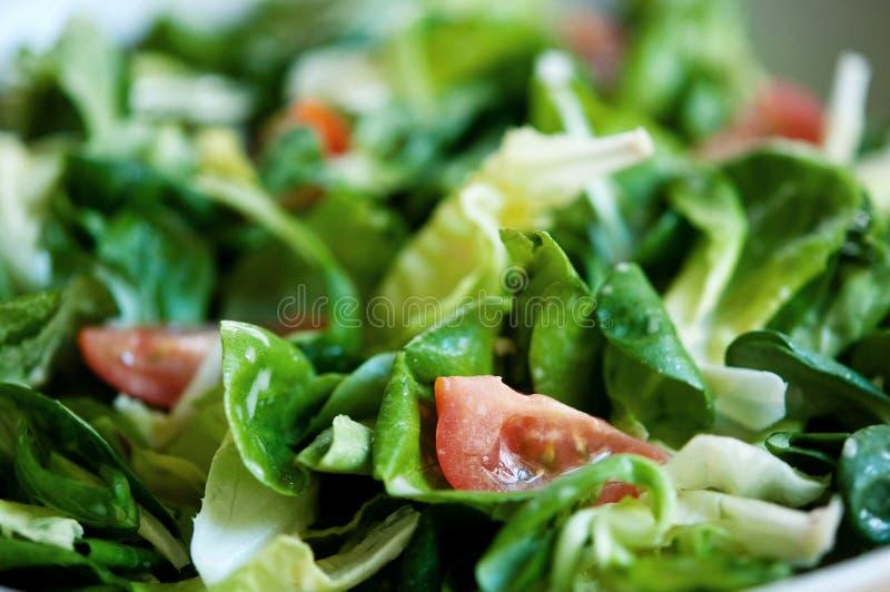 Salat-Mahlzeit lizenzfreie stockbilder