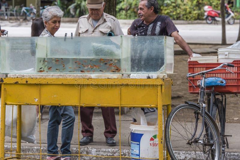 Sale of aquarium fishes royalty free stock photos