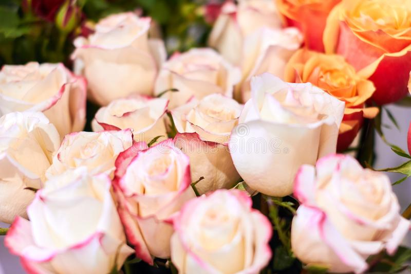 Sale of beautiful white roses, business concept royalty free stock photo