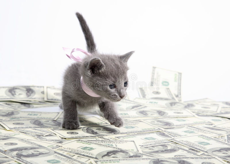 Sale of kittens. Sale of thoroughbred kittens from large nurseries stock photos