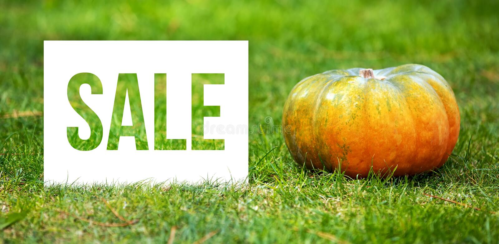 Sale message with orange and green pumpkin. royalty free stock image