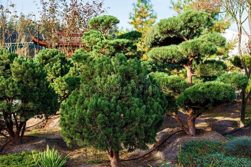 Sale of trees in the garden center royalty free stock image