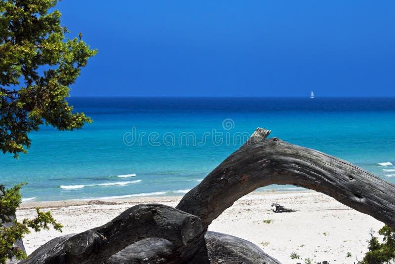 Saleccia Beach, Corsica. Mediterranean color at Saleccia Beach with fallen tree trunks and distant sailboat, Corsica, France stock image