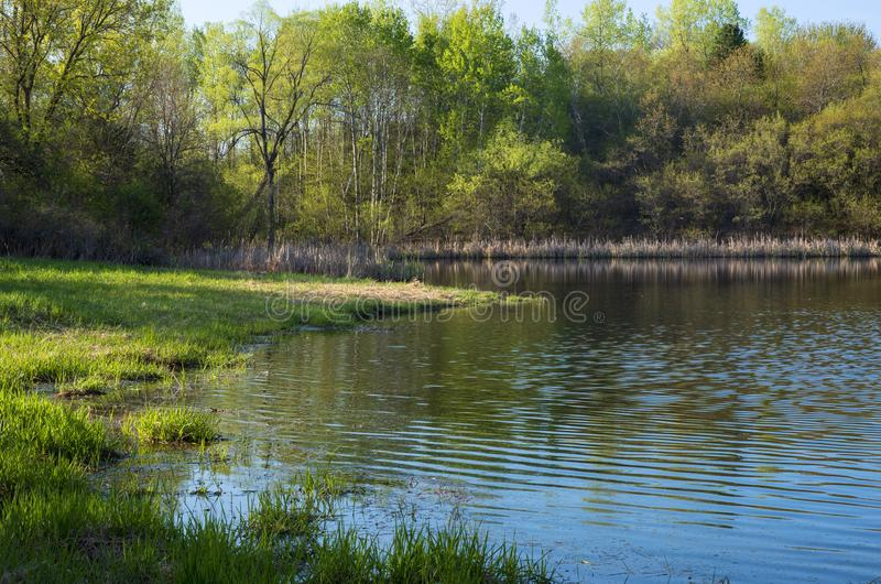 Salem Hills Pond and Woodlands in Spring. Along banks of pond at edge of forest during spring season in salem hills park inver grove heights minnesota royalty free stock photos