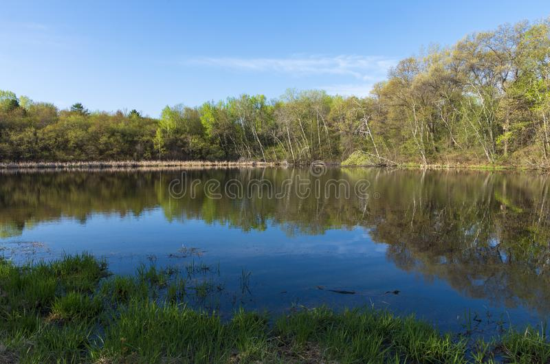 Salem Hills Spring Horizon and Reflections. Forest across pond and reflections atop water during spring at salem hills park in inver grove heights minnesota stock image