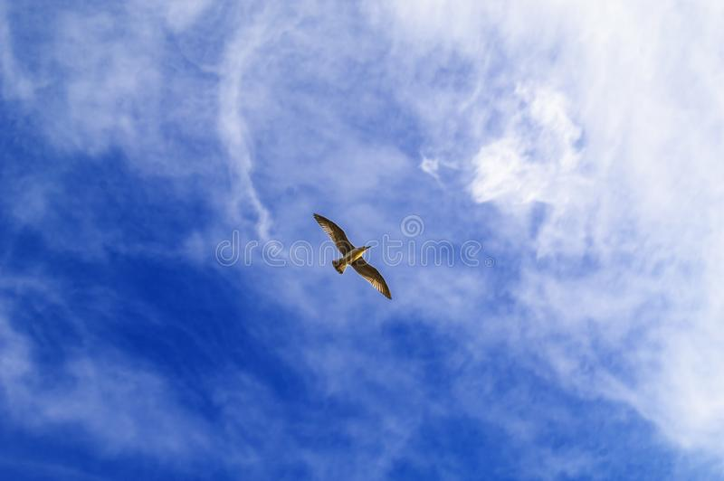Salendo nel gabbiano dell'uccello del cielo blu Nuvole bianche nel giorno soleggiato Priorità bassa del tempo Concetto di libertà fotografia stock libera da diritti