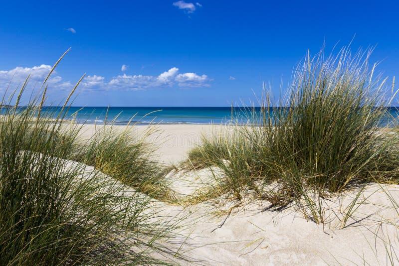 Salento, dunas de areia fotografia de stock