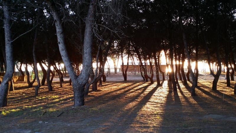 Salento, Italia fotografie stock libere da diritti