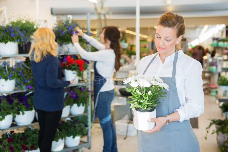 Salesgirl держа цветочный горшок в магазине флориста стоковые фото