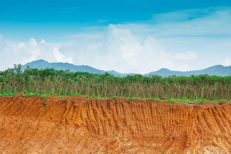 Saleté dessous dans la ferme de manioc photos stock
