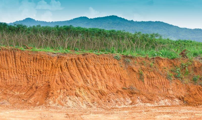 Saleté dessous dans la ferme de manioc. image stock