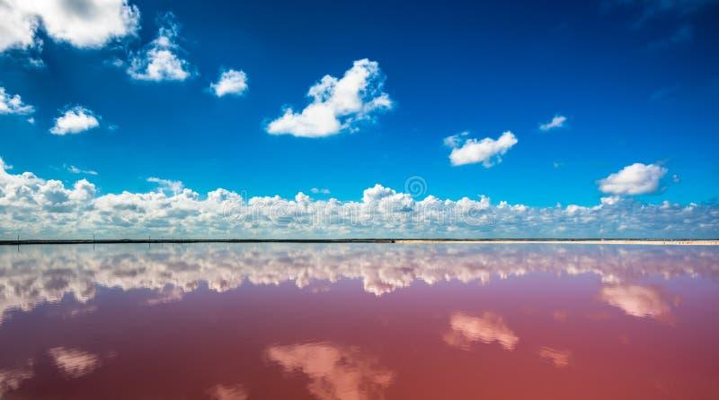 Salgue a lagoa cor-de-rosa em Las Coloradas, Iucat?o, M?xico fotos de stock