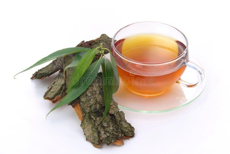 Salgueiro do chá imagem de stock