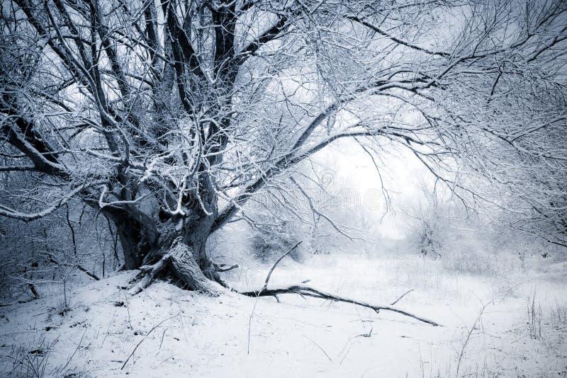 Download Salgueiro do inverno imagem de stock. Imagem de gelo - 12802367