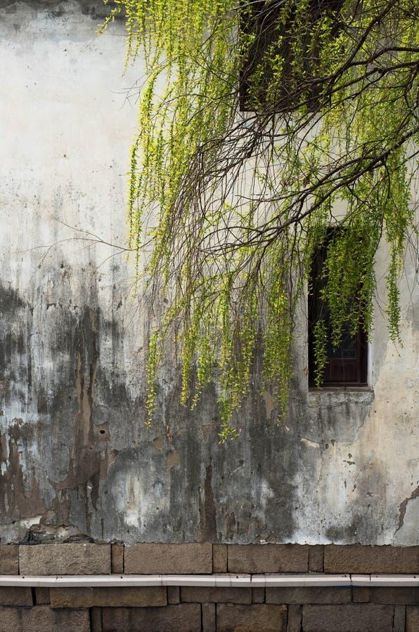 Salgueiro e parede velha em suzhou fotografia de stock