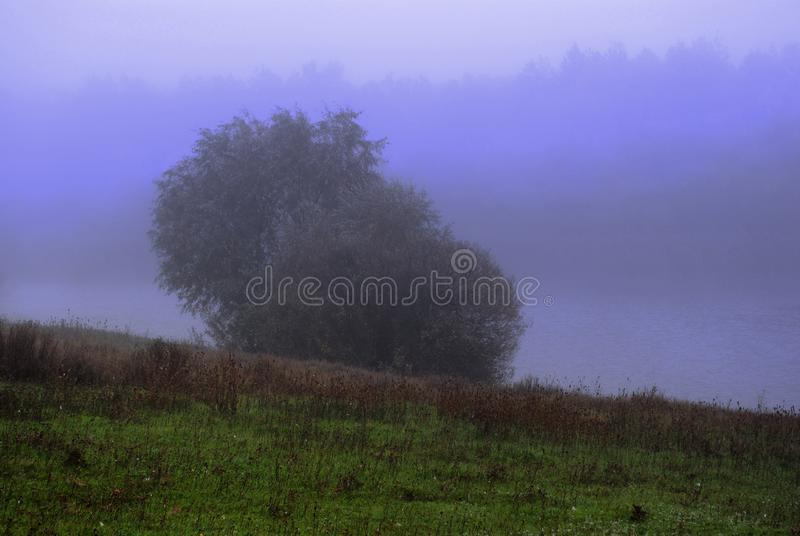 Salgueiros e névoa roxa nos montes com grama verde na borda da floresta perto da lagoa, amanhecer fotografia de stock royalty free