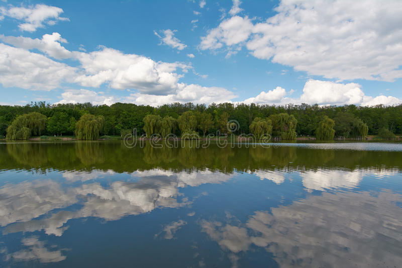 Salice del lago immagine stock libera da diritti