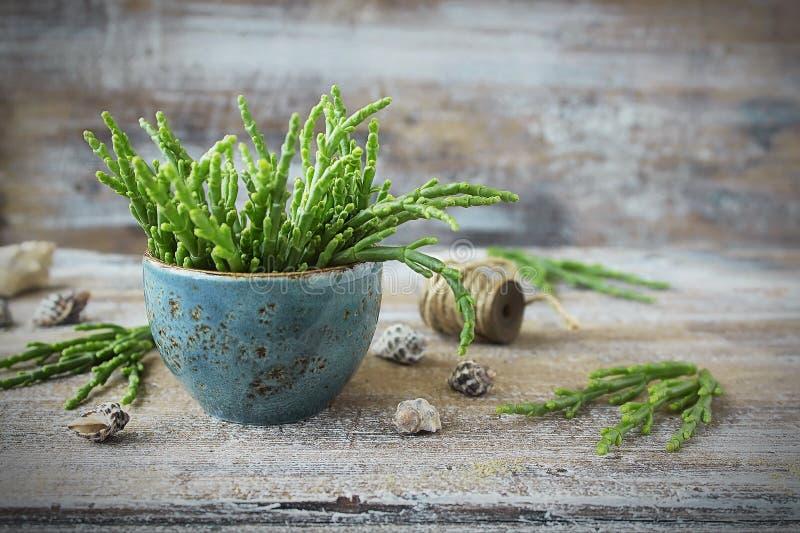 Salicornia fresco - el espárrago del mar imagenes de archivo