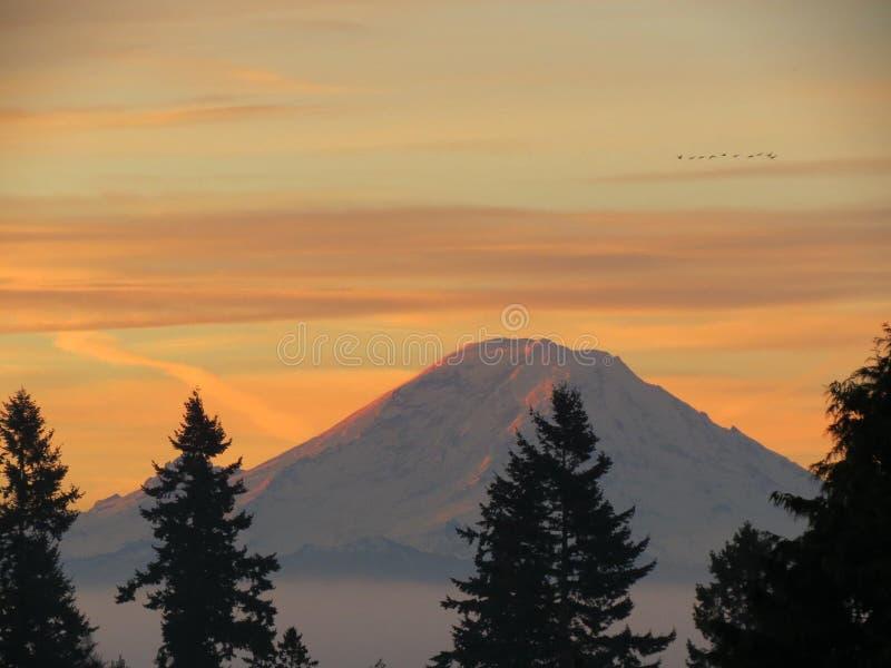 Download Salida del sol foto de archivo. Imagen de invierno, pinos - 44854340