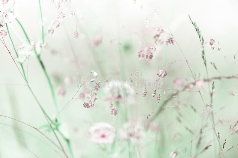 Salida del sol asombrosa en el prado del verano con los wildflowers foto de archivo