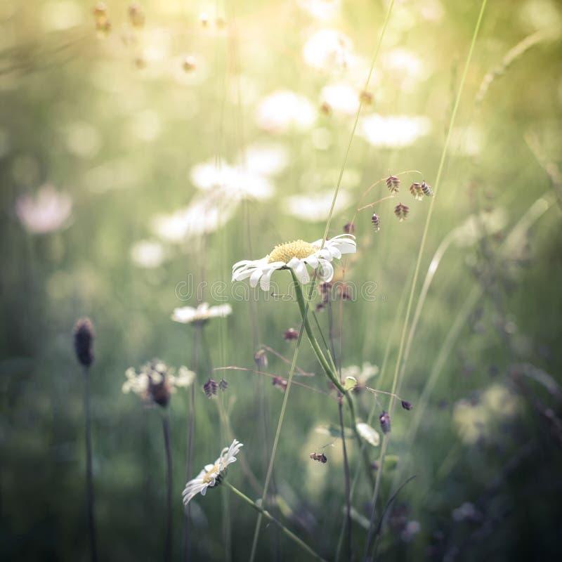Salida del sol asombrosa en el prado del verano con los wildflowers fotografía de archivo libre de regalías