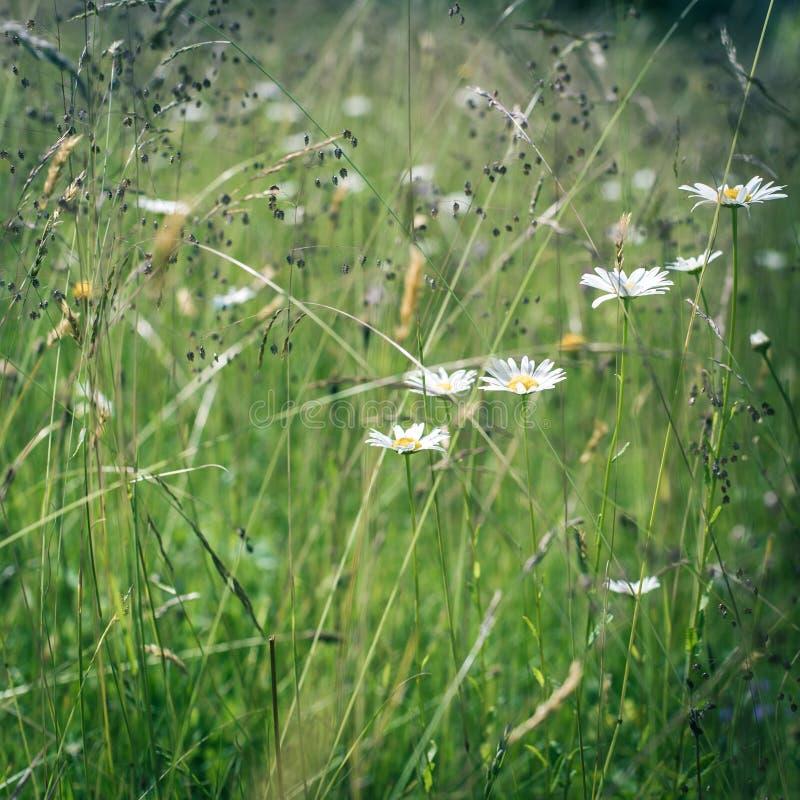 Salida del sol asombrosa en el prado del verano con los wildflowers imagenes de archivo