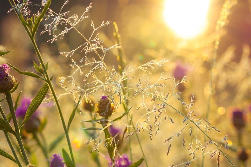 Salida del sol borrosa en un prado del verano imagenes de archivo