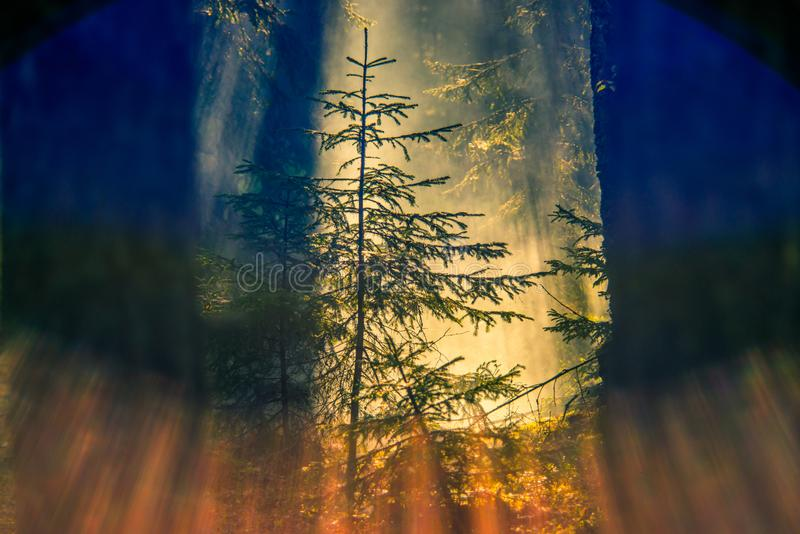 Salida del sol brumosa en primer del bosque imágenes de archivo libres de regalías