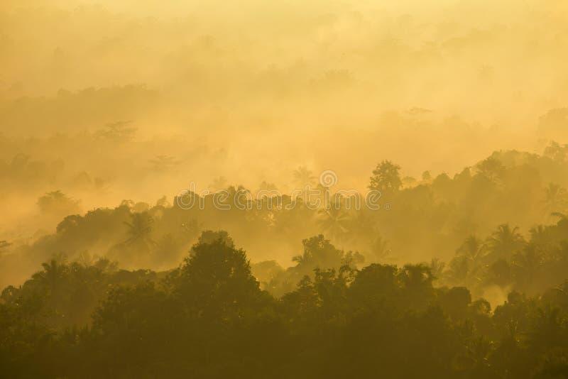 Salida del sol brumosa hermosa en la niebla tropical del bosque en Indonesia fotografía de archivo