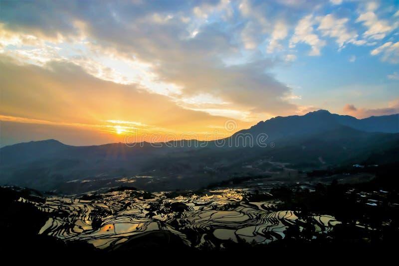 Salida del sol del campo colgante del arroz fotografía de archivo libre de regalías