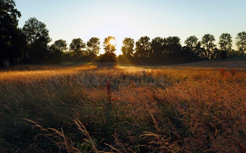 Salida del sol del campo de trigo en Francia imagen de archivo