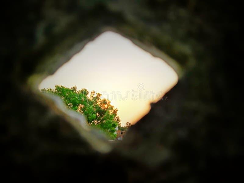 Salida del sol colorida con el árbol Visi?n hermosa foto de archivo libre de regalías