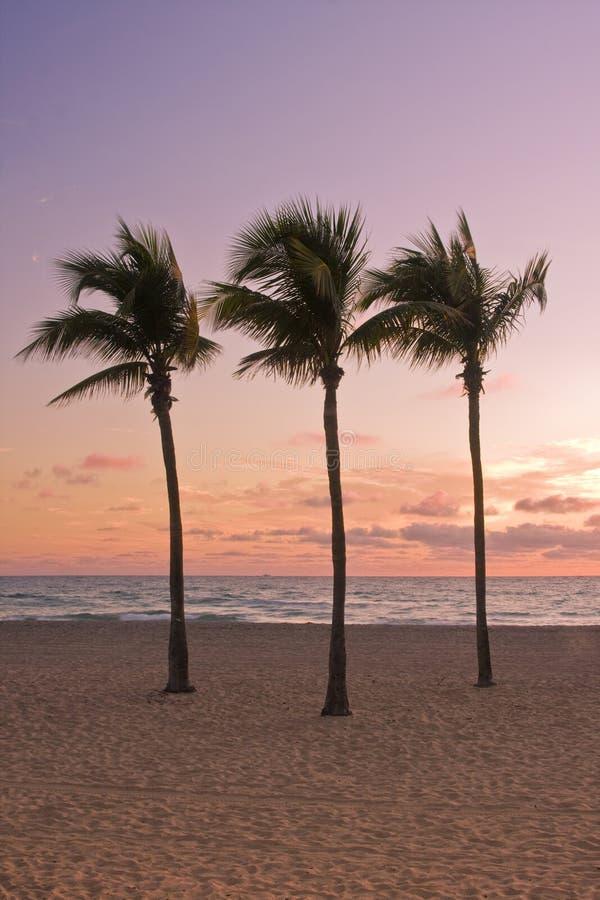 Salida del sol colorida en Miami Beach la Florida fotos de archivo