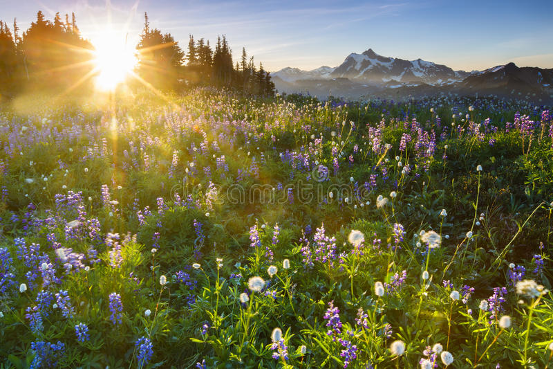 Salida del sol con las flores imagen de archivo