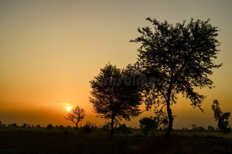 Salida del sol con los árboles foto de archivo