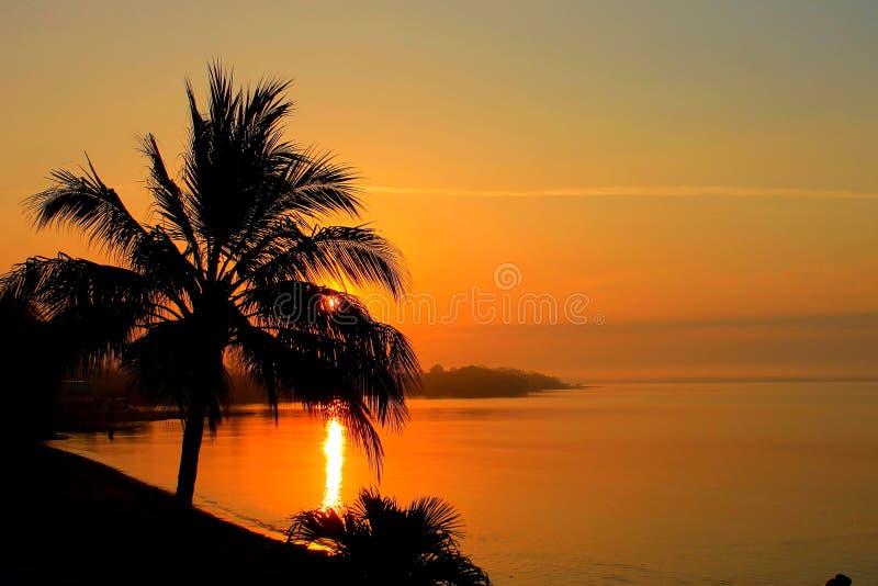Salida del sol con un palmtree fotografía de archivo