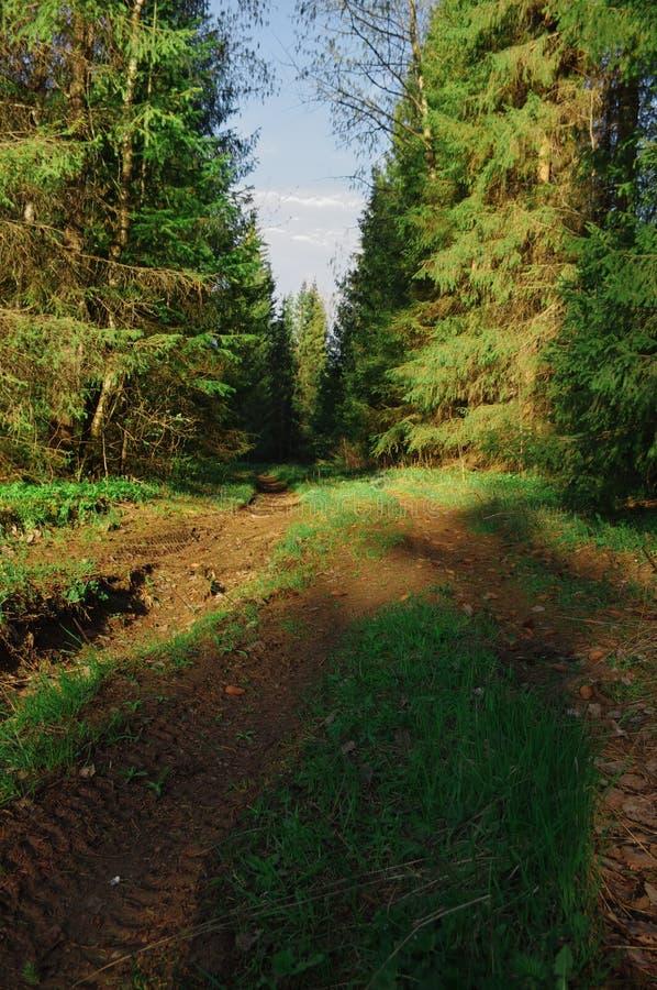 Salida del sol de la primavera de los árboles del camino forestal fotos de archivo