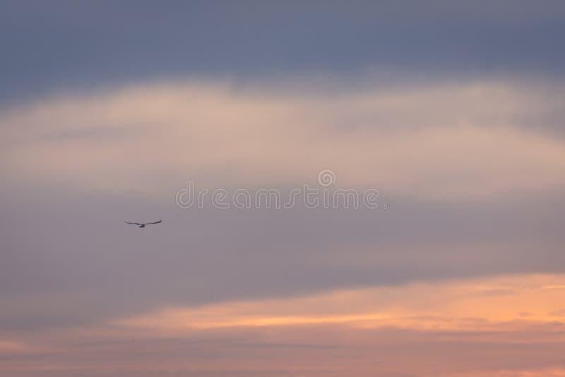 Salida del sol de la puesta del sol del cielo del color solamente Imagen colorida fotos de archivo
