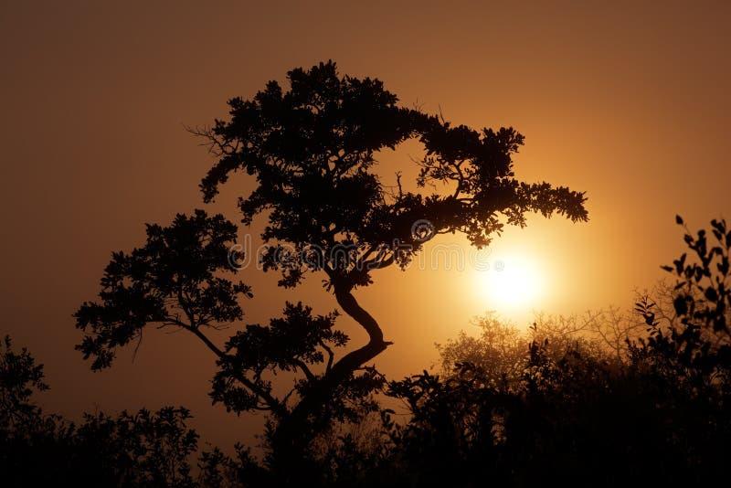 Salida del sol de la sabana foto de archivo