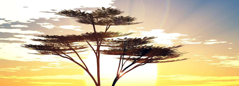Salida del sol de la sol en la sabana ilustración del vector