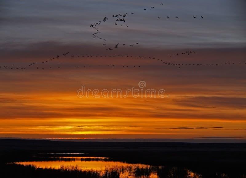 Salida del sol de las aves acuáticas fotos de archivo