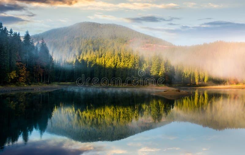 Salida del sol de niebla magnífica en el lago en bosque imagenes de archivo