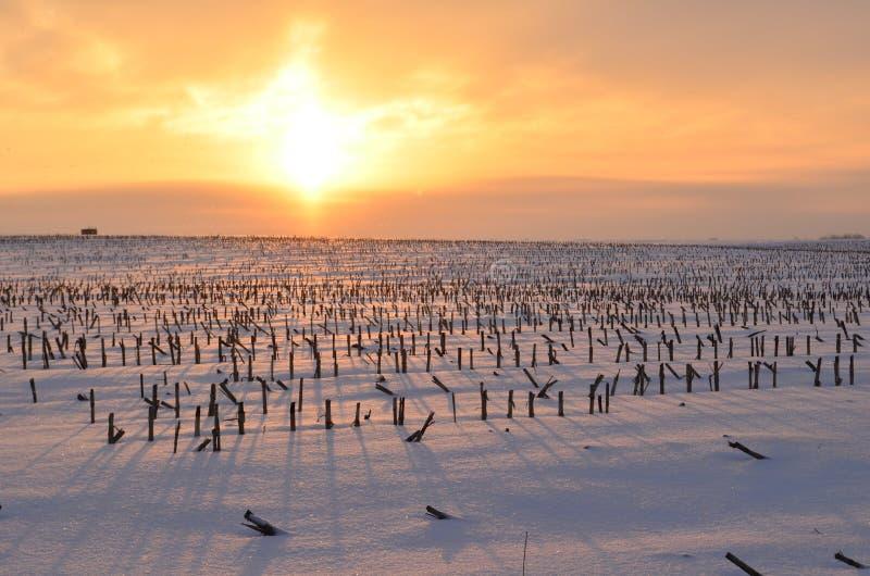 Salida del sol de oro que echa sombras largas en un campo nevoso de los tallos cortados del maíz imagen de archivo libre de regalías
