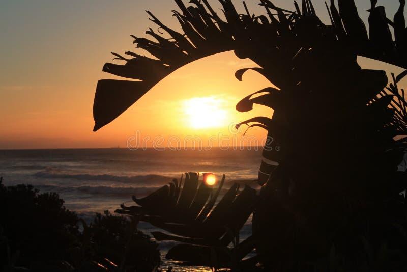 Salida del sol debajo del árbol de plátano en la bahía Londres del este de Morgan en la costa salvaje de Suráfrica foto de archivo libre de regalías