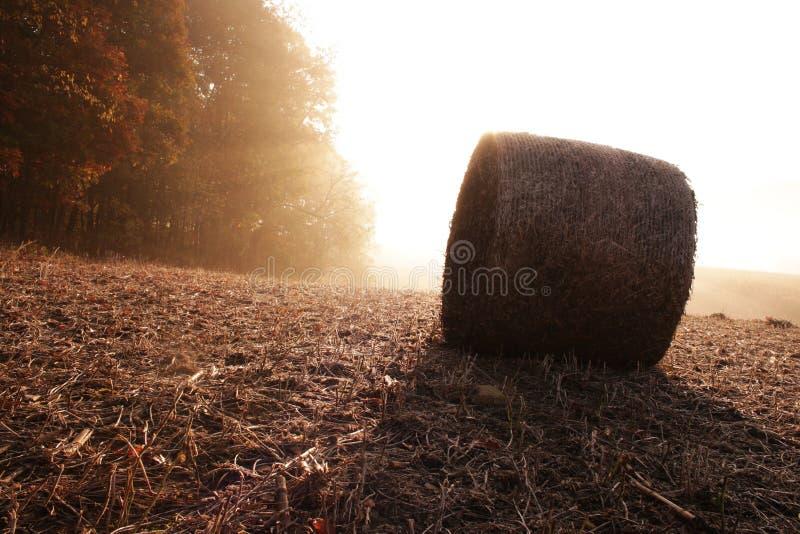 Salida del sol del campo fotografía de archivo libre de regalías
