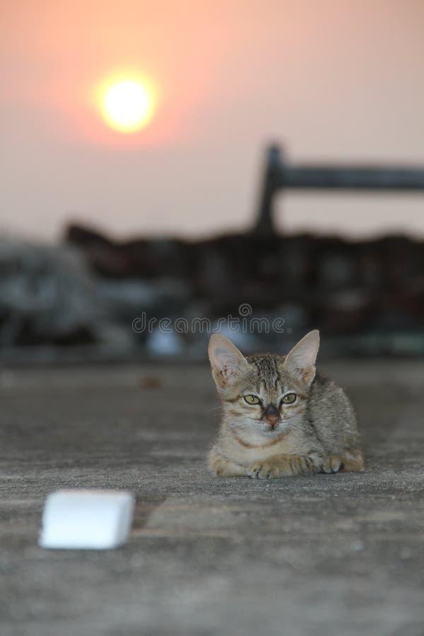 Salida del sol del gato fotos de archivo