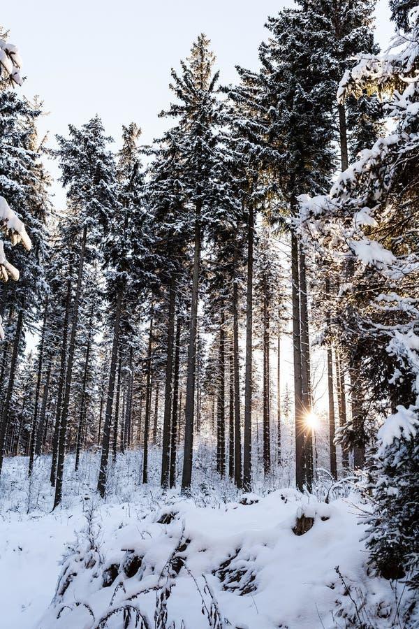 Salida del sol del invierno en bosque de la montaña imagen de archivo libre de regalías