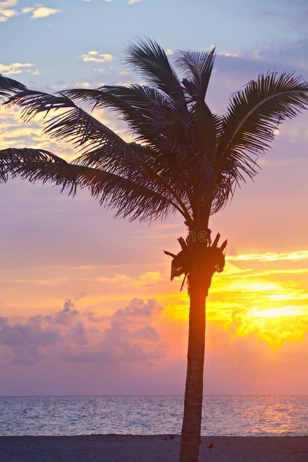 Salida del sol del verano de Miami Beach, de la Florida o puesta del sol colorida con las palmeras imagen de archivo libre de regalías